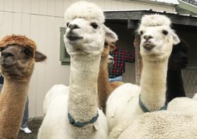 Six Paca Farm